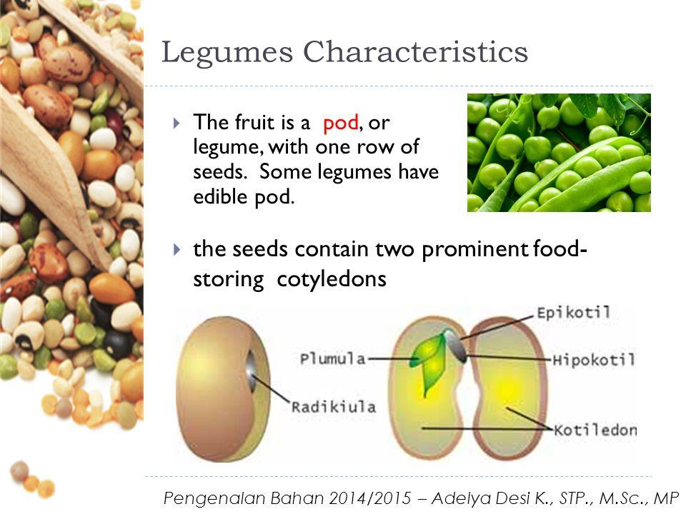 Legumes Characteristics  the presence of root nodules, which contain nitrogen-fixing bacteria  Rhizobium Pengenalan Bahan 2014/2015 – Adelya Desi K., STP., M.Sc., MP