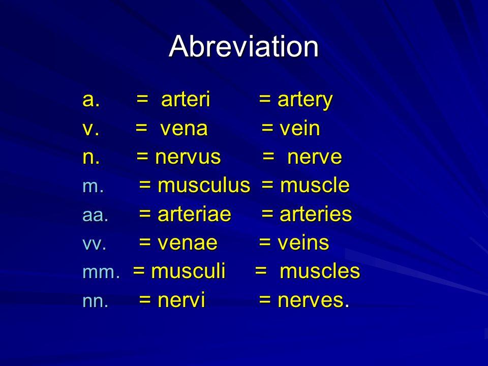 Abreviation a. = arteri = artery v. = vena = vein n. = nervus = nerve m. = musculus = muscle aa. = arteriae = arteries vv. = venae = veins mm. = muscu