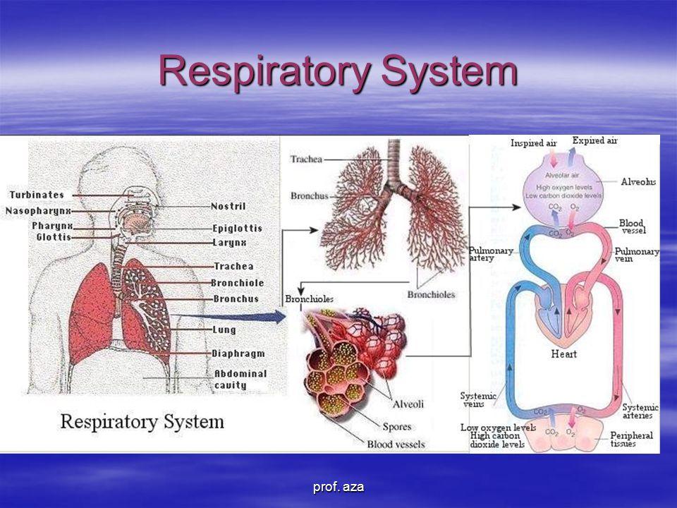 Respiratory System prof. aza