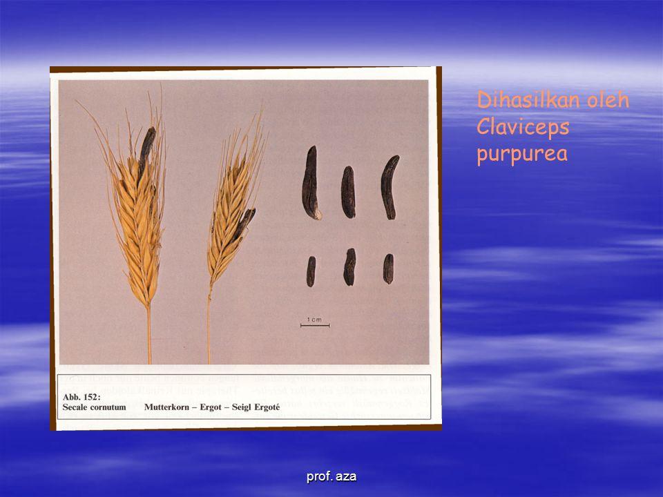 Dihasilkan oleh Claviceps purpurea prof. aza