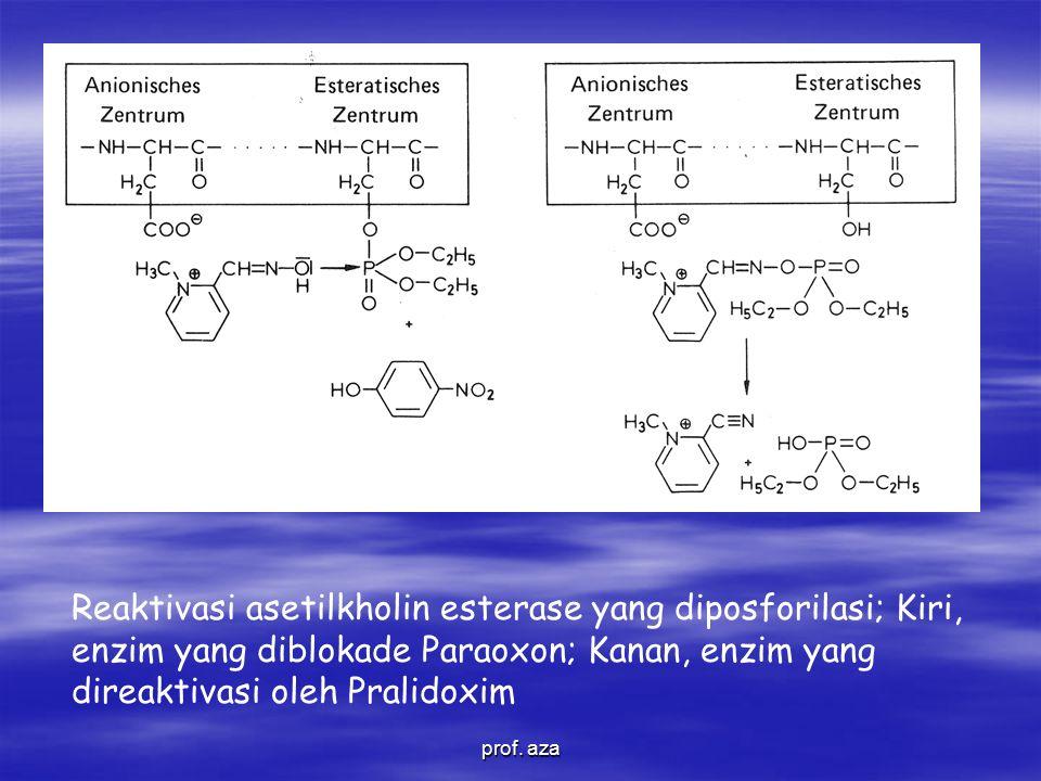 Reaktivasi asetilkholin esterase yang diposforilasi; Kiri, enzim yang diblokade Paraoxon; Kanan, enzim yang direaktivasi oleh Pralidoxim prof.