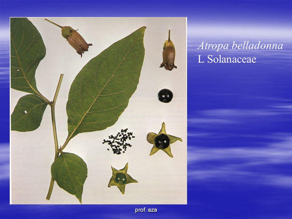 Atropa belladonna L Solanaceae prof. aza