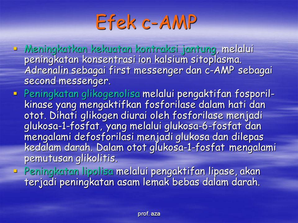 Efek c-AMP  Meningkatkan kekuatan kontraksi jantung, melalui peningkatan konsentrasi ion kalsium sitoplasma.