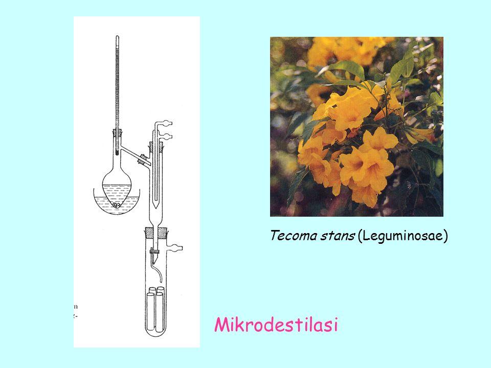 Mikrodestilasi Tecoma stans (Leguminosae)
