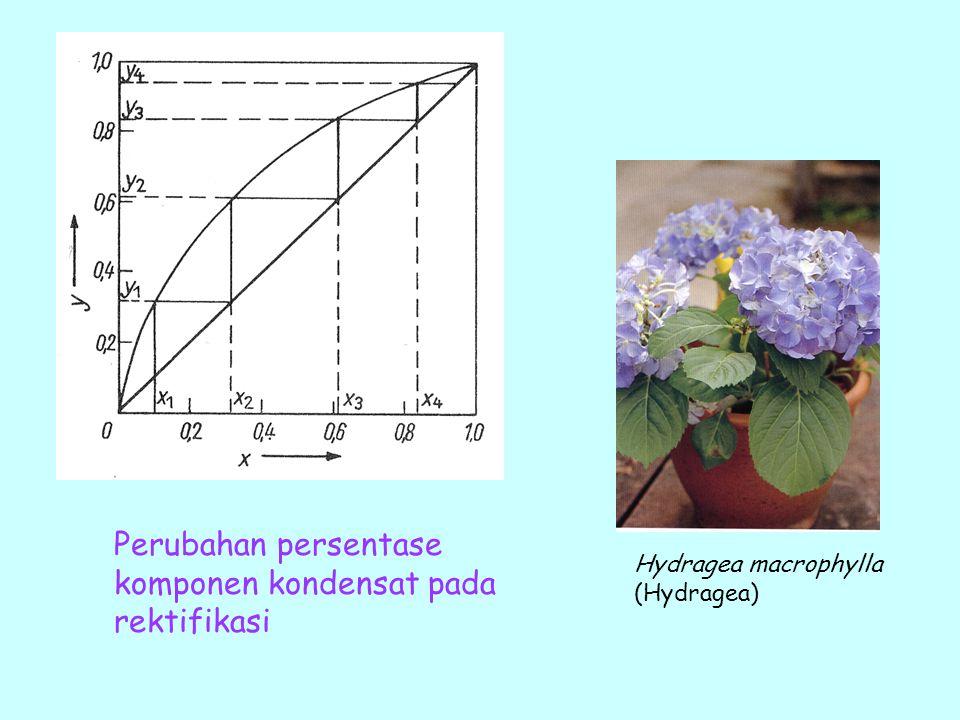 Perubahan persentase komponen kondensat pada rektifikasi Hydragea macrophylla (Hydragea)