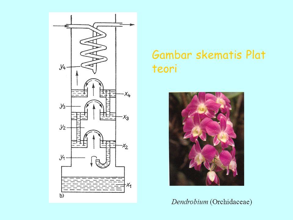 Gambar skematis Plat teori Dendrobium (Orchidaceae)