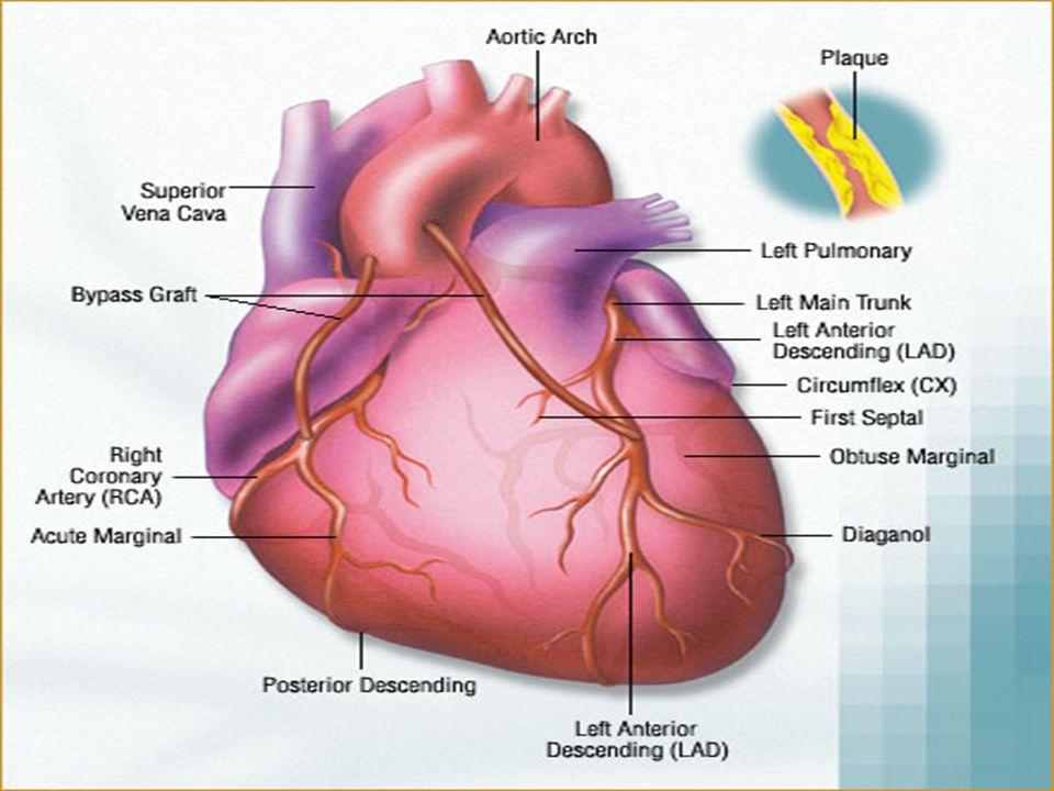 53  Obat-obat untuk mengontrol keluhan iskemia harus dilanjutkan  Aspirin  Beta-blocker  ACE inhibitor Pengobatan Pasca Perawatan  Berhenti merokok  Pertahankan BB optimal  Aktivitas fisik sesuai dengan hasil treadmill  Diet  Rendah lemak jenuh dengan kolesterol, bila perlu dengan target LDL < 100 mg/dL  Pengendalian hipertensi  Pengendalian ketat gula darah pada penderita DM Modifikasi Faktor Risiko
