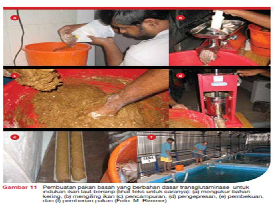Kotoran dan sisa pakan berlebih yang menumpuk di bagian bawah tangki disiphon secara teratur untuk mencegah penurunan kualitas air.