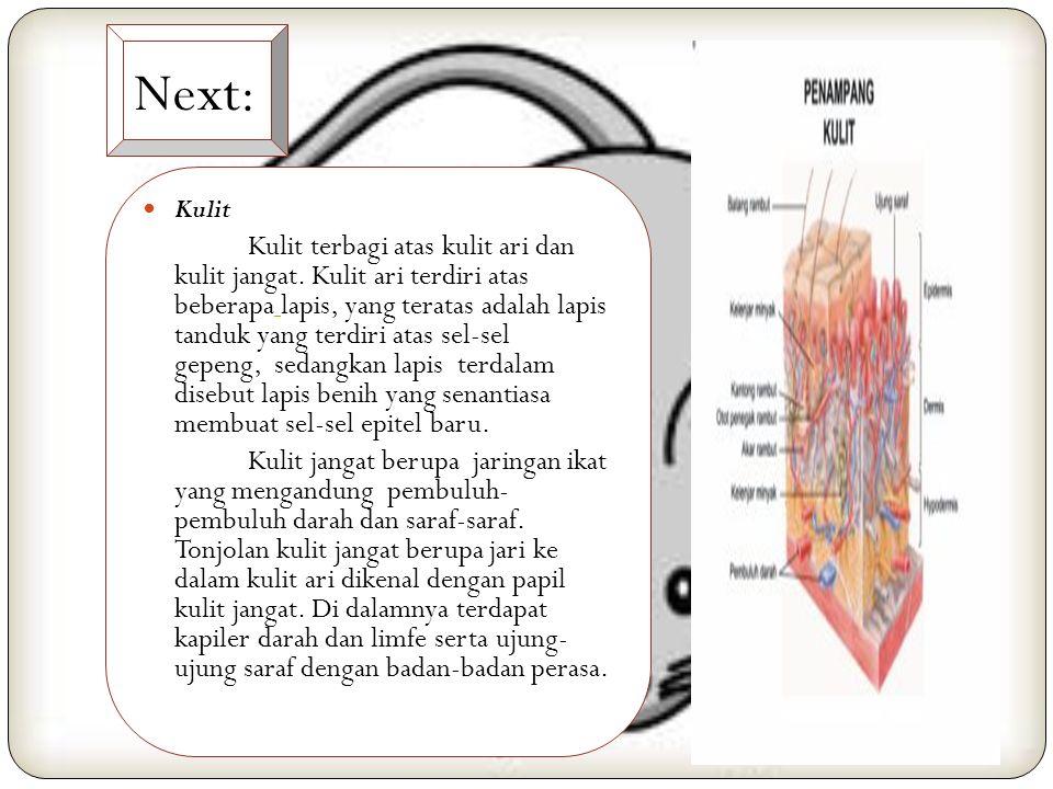 Next: Alat Pendengaran Alat pendengaran terdiri atas pendengar luar, pendengar tengah dan pendengar dalam. Pendengar luar terdiri ata s daun telinga d