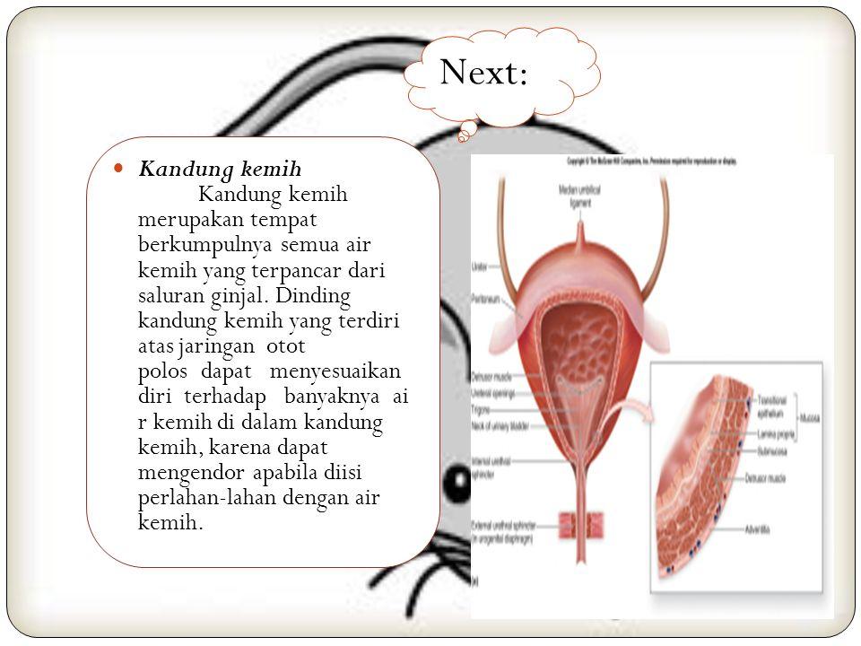 7. Sistem Urinaria Ginjal Ginjal adalah suatu kelenjar berbentu k seperti kacang yang terletak pada dinding belakang rongga perut setinggi ruas-ruas t