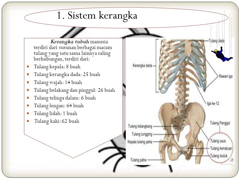 Anatomi Tubuh Manusia Anatomi Tubuh Manusia disusun kedalam beberapa bagian sistem tubuh, yaitu: 1. Sistem Kerangka 2. Sistem Otot 3. Sistem Peredaran