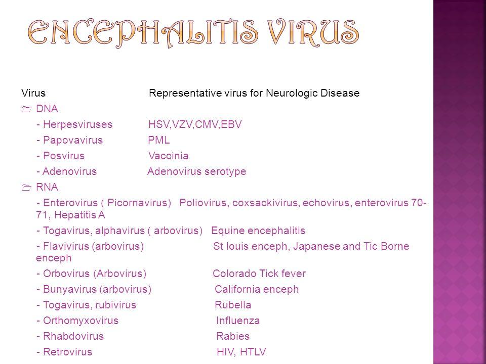 Virus Representative virus for Neurologic Disease  DNA - Herpesviruses HSV,VZV,CMV,EBV - Papovavirus PML - Posvirus Vaccinia - Adenovirus Adenovirus
