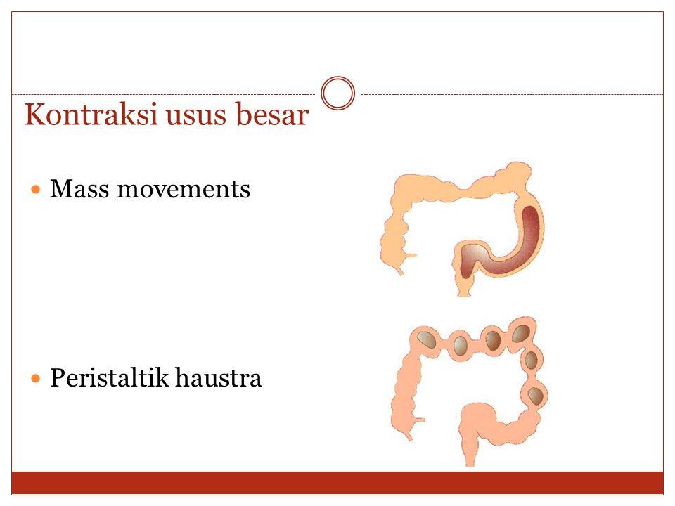 Kontraksi usus besar Mass movements Peristaltik haustra