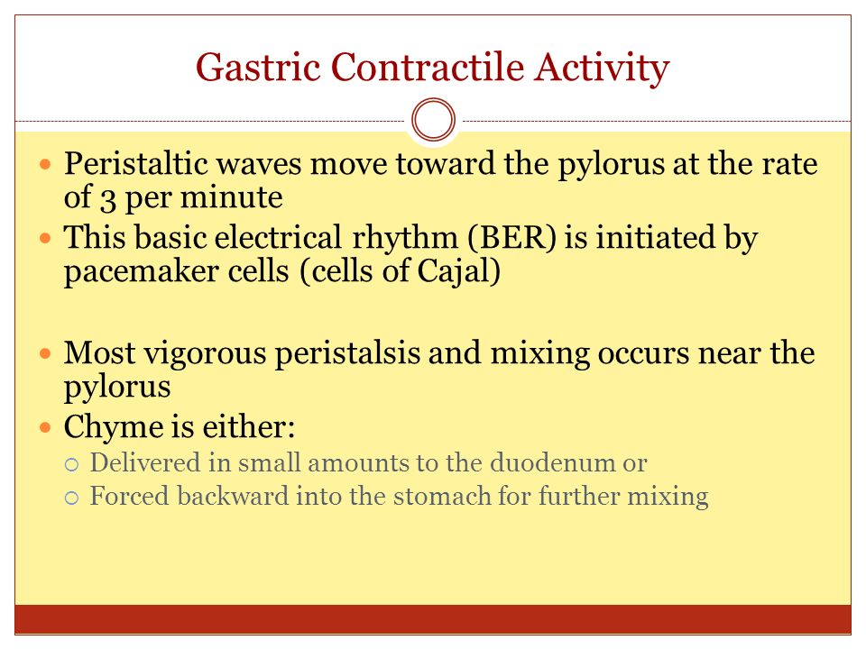 Gastric Contractile Activity Peristaltic waves move toward the pylorus at the rate of 3 per minute This basic electrical rhythm (BER) is initiated by pacemaker cells (cells of Cajal) Most vigorous peristalsis and mixing occurs near the pylorus Chyme is either:  Delivered in small amounts to the duodenum or  Forced backward into the stomach for further mixing