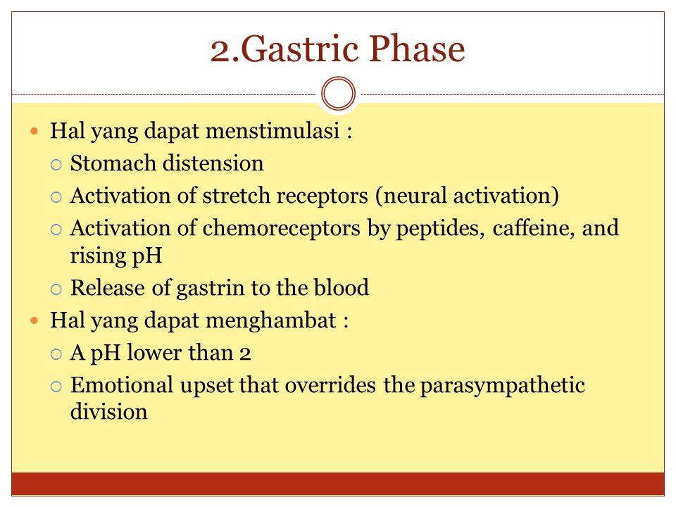 2.Gastric Phase Hal yang dapat menstimulasi :  Stomach distension  Activation of stretch receptors (neural activation)  Activation of chemoreceptor