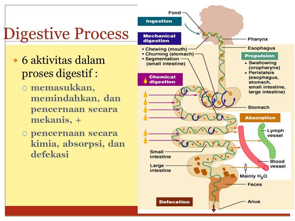Digestive Process 6 aktivitas dalam proses digestif :  memasukkan, memindahkan, dan pencernaan secara mekanis, +  pencernaan secara kimia, absorpsi,