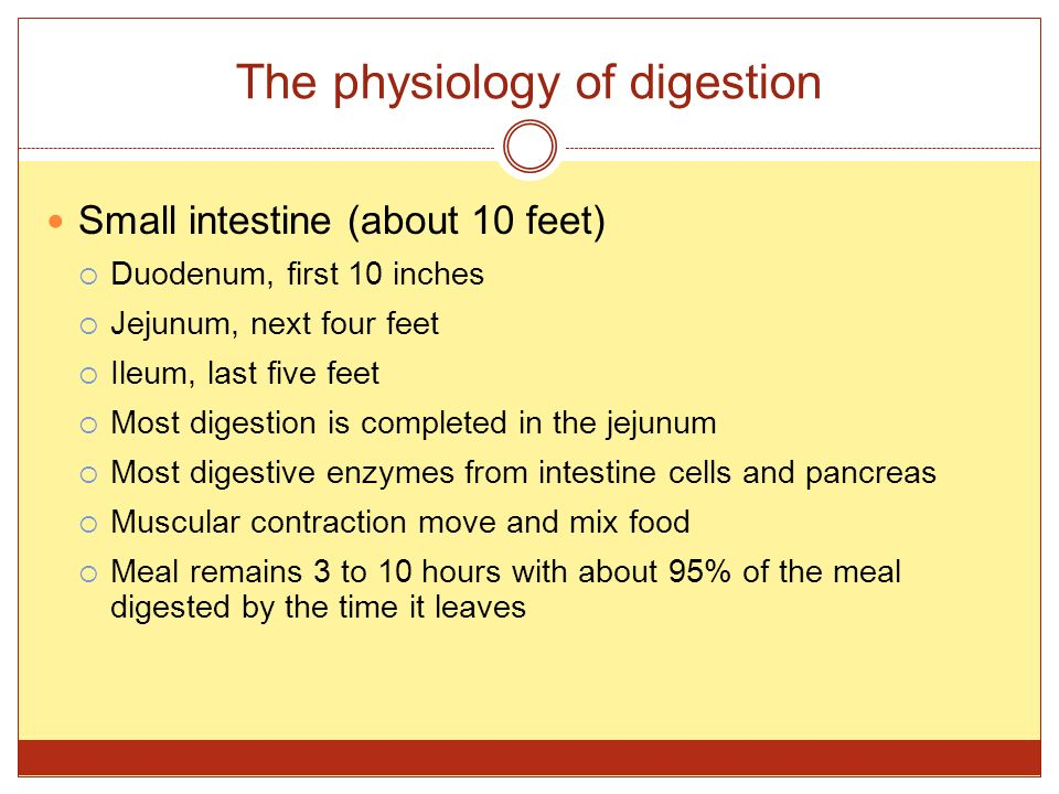 The physiology of digestion Small intestine (about 10 feet)  Duodenum, first 10 inches  Jejunum, next four feet  Ileum, last five feet  Most diges
