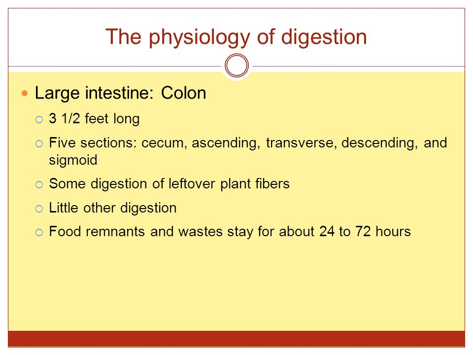The physiology of digestion Large intestine: Colon  3 1/2 feet long  Five sections: cecum, ascending, transverse, descending, and sigmoid  Some dig