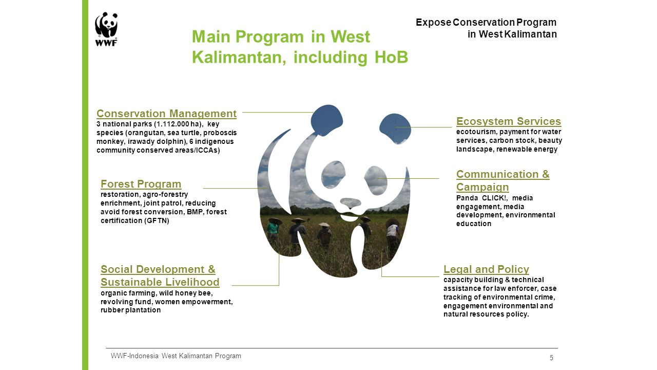 Main Program in West Kalimantan, including HoB 5 Expose Conservation Program in West Kalimantan WWF-Indonesia West Kalimantan Program Conservation Management 3 national parks (1.112.000 ha), key species (orangutan, sea turtle, proboscis monkey, irawady dolphin), 6 indigenous community conserved areas/ICCAs) Ecosystem Services ecotourism, payment for water services, carbon stock, beauty landscape, renewable energy Social Development & Sustainable Livelihood organic farming, wild honey bee, revolving fund, women empowerment, rubber plantation Communication & Campaign Panda CLICK!, media engagement, media development, environmental education Legal and Policy capacity building & technical assistance for law enforcer, case tracking of environmental crime, engagement environmental and natural resources policy.