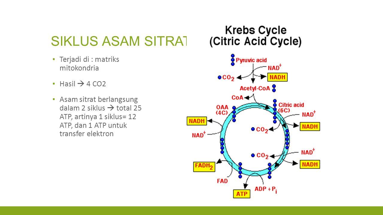 SIKLUS ASAM SITRAT ▪ Terjadi di : matriks mitokondria ▪ Hasil  4 CO2 ▪ Asam sitrat berlangsung dalam 2 siklus  total 25 ATP, artinya 1 siklus= 12 AT
