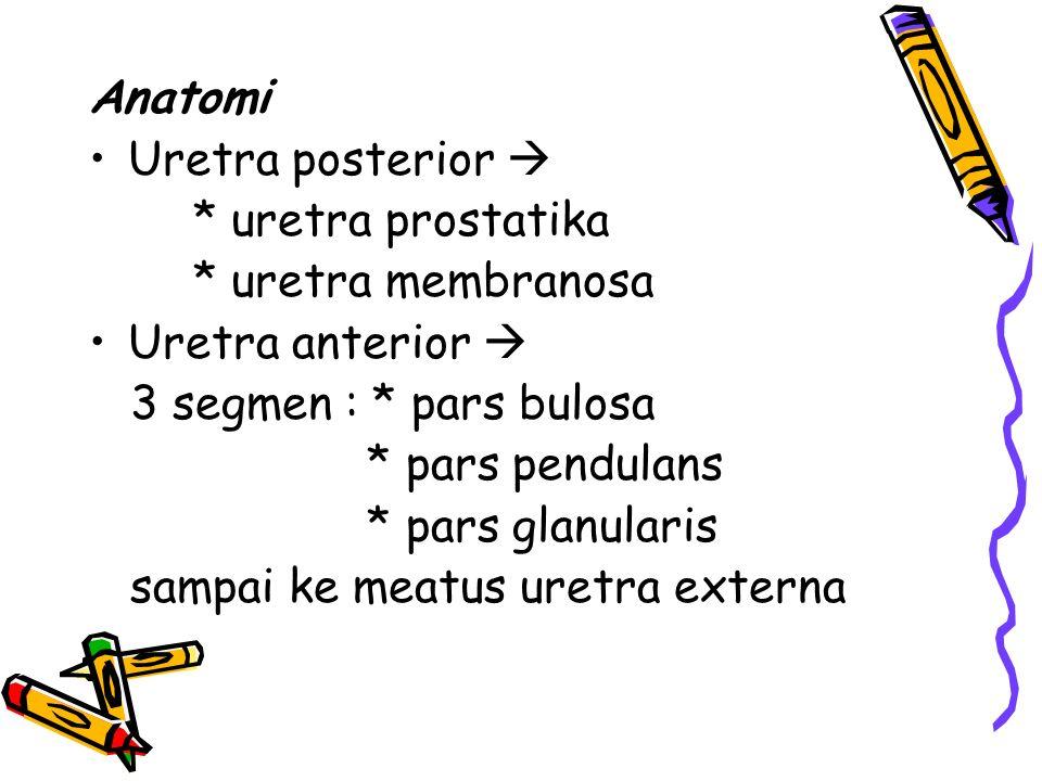 Anatomi Uretra posterior  * uretra prostatika * uretra membranosa Uretra anterior  3 segmen : * pars bulosa * pars pendulans * pars glanularis sampa
