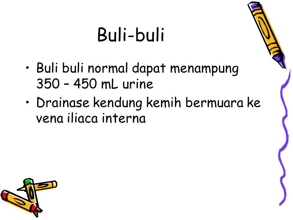 Buli-buli Buli buli normal dapat menampung 350 – 450 mL urine Drainase kendung kemih bermuara ke vena iliaca interna