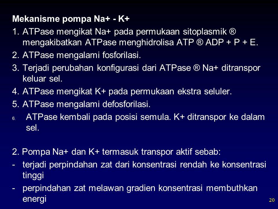 20 Mekanisme pompa Na+ - K+ 1.ATPase mengikat Na+ pada permukaan sitoplasmik ® mengakibatkan ATPase menghidrolisa ATP ® ADP + P + E.