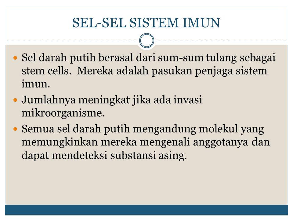 SEL-SEL SISTEM IMUN Sel darah putih berasal dari sum-sum tulang sebagai stem cells. Mereka adalah pasukan penjaga sistem imun. Jumlahnya meningkat jik