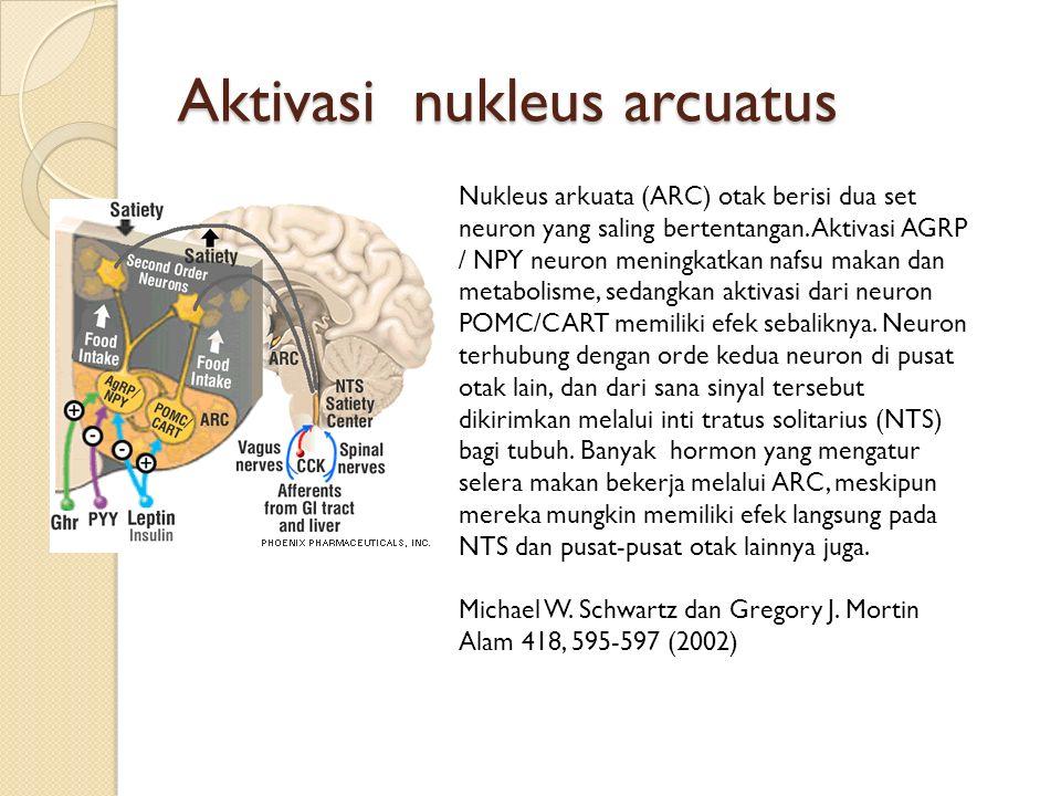 Aktivasi nukleus arcuatus Nukleus arkuata (ARC) otak berisi dua set neuron yang saling bertentangan. Aktivasi AGRP / NPY neuron meningkatkan nafsu mak