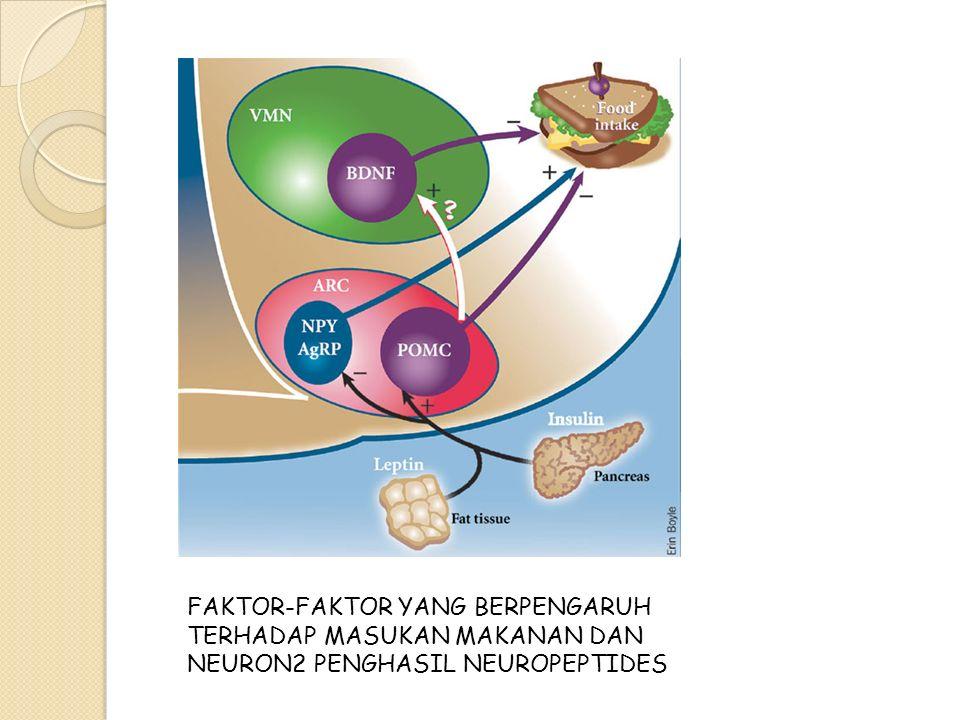 FAKTOR-FAKTOR YANG BERPENGARUH TERHADAP MASUKAN MAKANAN DAN NEURON2 PENGHASIL NEUROPEPTIDES