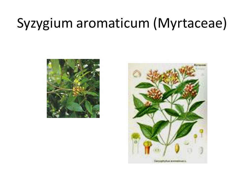 Syzygium aromaticum (Myrtaceae)