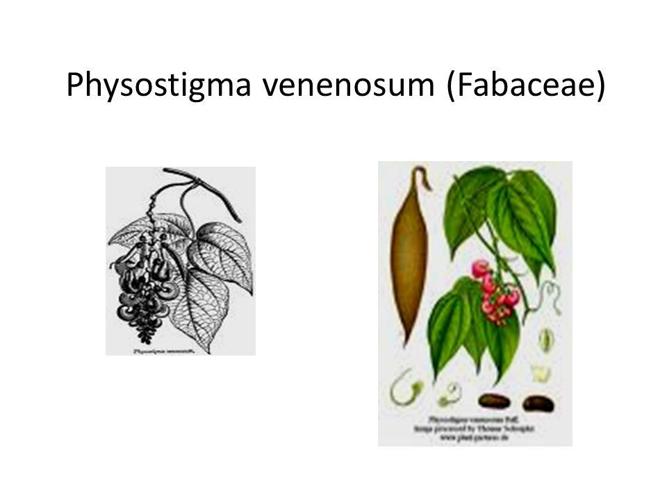 Physostigma venenosum (Fabaceae)