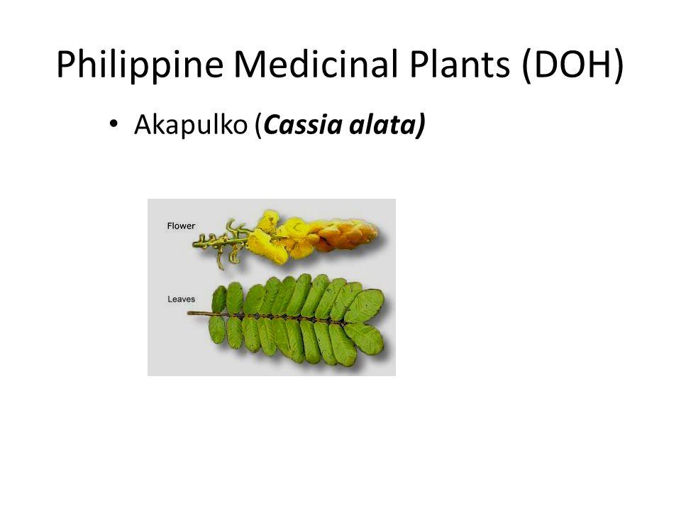 Philippine Medicinal Plants (DOH) Akapulko (Cassia alata)