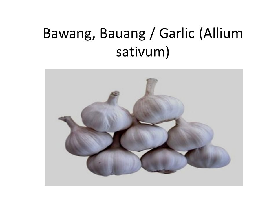 Bawang, Bauang / Garlic (Allium sativum)