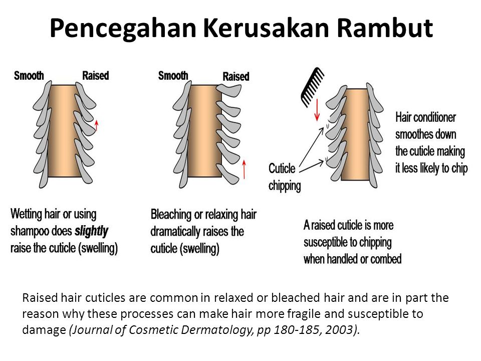 Pencegahan Kerusakan Rambut Raised hair cuticles are common in relaxed or bleached hair and are in part the reason why these processes can make hair m