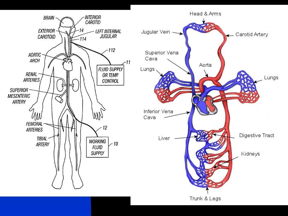 MAP MAP > 60 mmhg, cukup untuk menjaga perfusi organ.