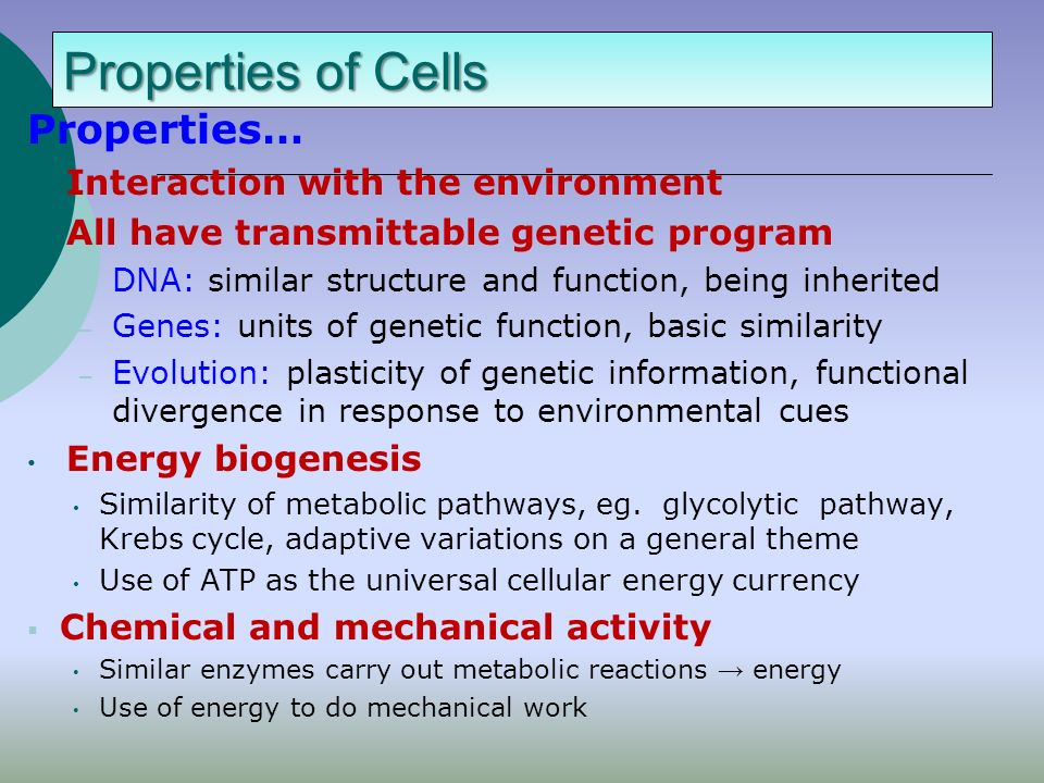 Cell diversity  Procaryotes- Eubacteria and Arhaebacteria  Eucaryotes- Protista, Fungi, Plants and Animals  Similarities:  Similarities: Procaryotes and eucaryotes Cell membrane energy metabolism Genetic code  Differences: Procaryotes are unicellular Except for many members of protista the rest of eukaryotes are multicellular Size: procaryotes 0.5-5 um, eucaryotes 5-500 um Membrane bound organelles present in eucaryotes but not procaryotes Reproduction: cell fission in procaryotes vs mitosis in eukarotes