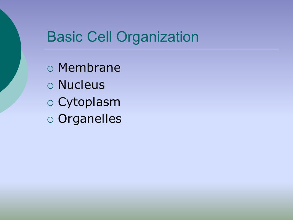 Cellular Classification Prokaryotes- before nucleus NO nucleus (nucleoid region) NO organelles Single, circular DNA Smaller, less complex E.g bacteria, archaea Eukaryotes- true nucleus Nucleus Membrane bound organelles DNA arranged on multiple chromosomes Larger E.g protists, fungi, plants, animals