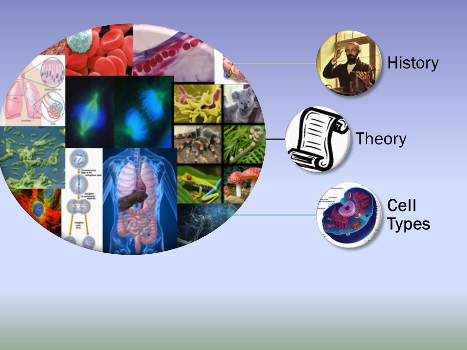 History Theory Cell Types