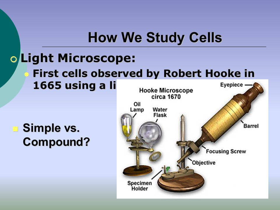 History of Cytology  Initial microscopes Robert Hooke (1665)  Origin of term cell Antoni Van Leeuwenhoek  First to visualize living cells  Cell Theory developed by Schleiden (1838), Schwann(1839) and Virchow (1855) Every organism is composed of 1+ cells A cell is the simplest unit to demonstrate the properties of life Cells arise only from previously existing cells