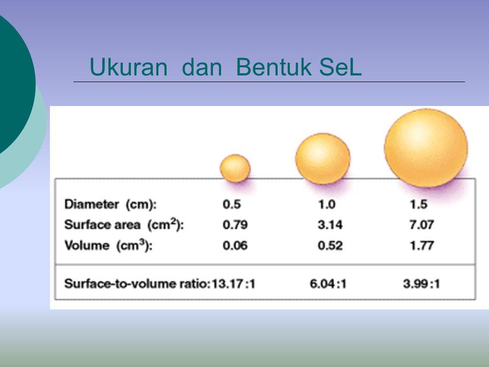 Definisi Sel : Sel adalah unit terkecil yang mampu melakukan fungsi-fungsi kehidupan Mengapa Sel Berukuran kecil ? Sel berukuran besar,lebih sedikit i
