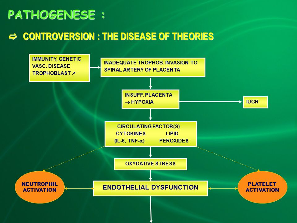 PATHOGENESE :  CONTROVERSION : THE DISEASE OF THEORIES IMMUNITY, GENETIC VASC.
