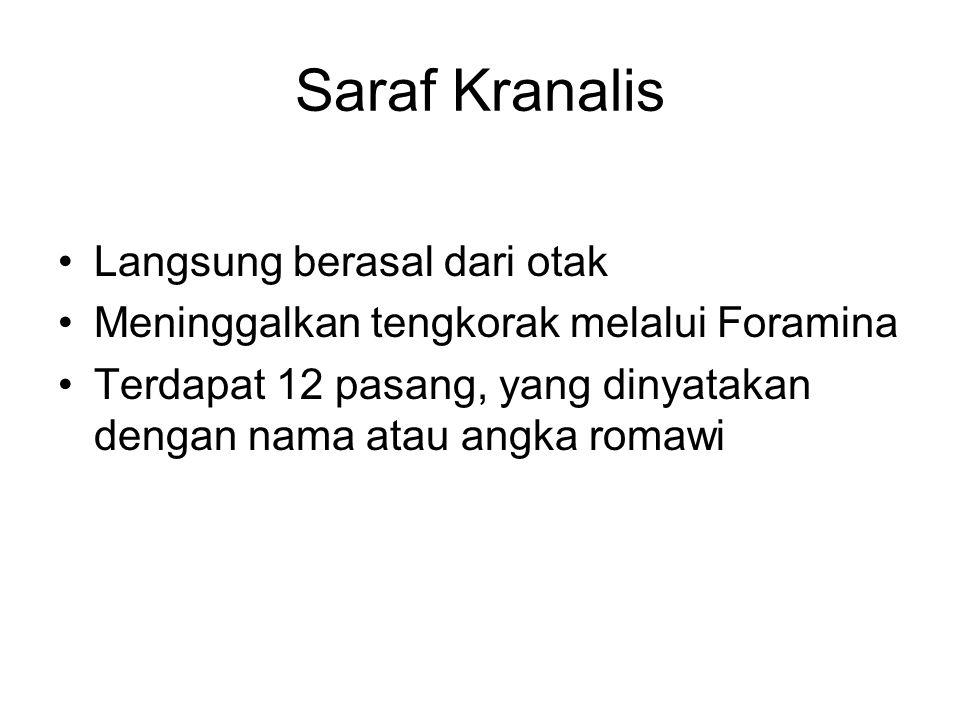Saraf Kranalis Langsung berasal dari otak Meninggalkan tengkorak melalui Foramina Terdapat 12 pasang, yang dinyatakan dengan nama atau angka romawi