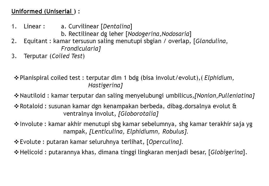Uniformed (Uniserial ) : 1.Linear : a. Curvilinear [Dentalina] b. Rectilinear dg leher [Nodogerina,Nodosaria] 2.Equitant : kamar tersusun saling menut