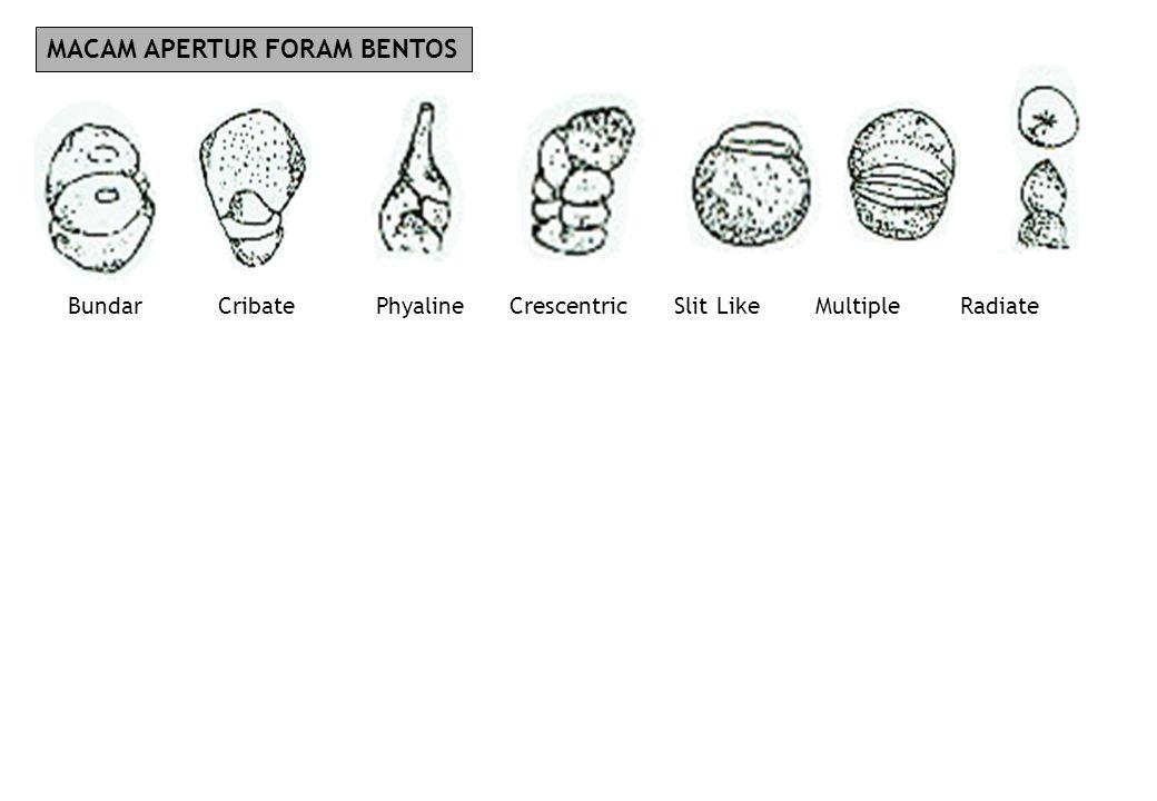 MACAM APERTUR FORAM BENTOS Bundar Cribate Phyaline Crescentric Slit LikeMultiple Radiate