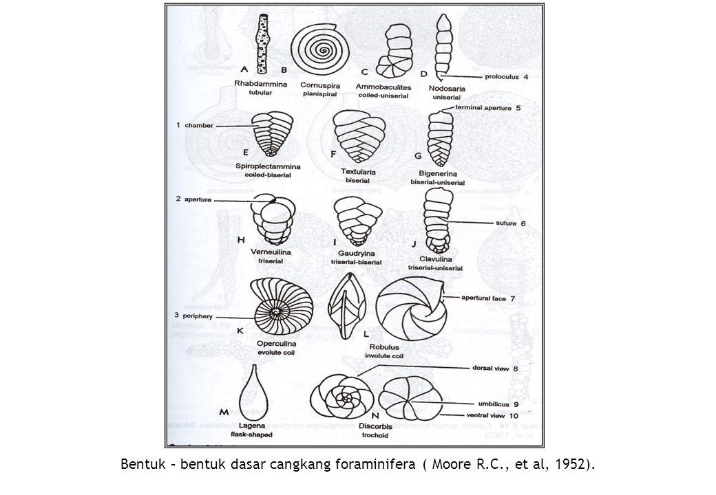 Bentuk – bentuk dasar cangkang foraminifera ( Moore R.C., et al, 1952).