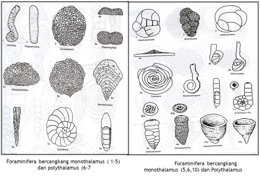 Foraminifera bercangkang monothalamus (5,6,10) dan Polythalamus Foraminifera bercangkang monothalamus ( 1-5) dan polythalamus (6-7