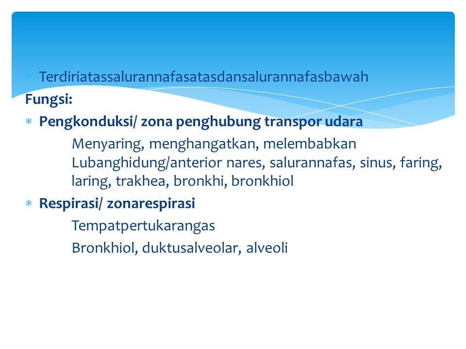  Terdiriatassalurannafasatasdansalurannafasbawah Fungsi:  Pengkonduksi/ zona penghubung transpor udara Menyaring, menghangatkan, melembabkan Lubanghidung/anterior nares, salurannafas, sinus, faring, laring, trakhea, bronkhi, bronkhiol  Respirasi/ zonarespirasi Tempatpertukarangas Bronkhiol, duktusalveolar, alveoli