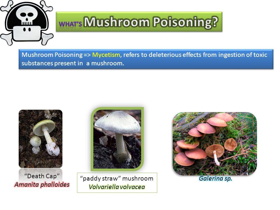 Penicillium : genus dari fungi yang memiliki 150 spesies teridentifikasi, 100 diantara diketahui dapat memproduksi mikotoksin Sporanya disebut conidium atau phialspore.