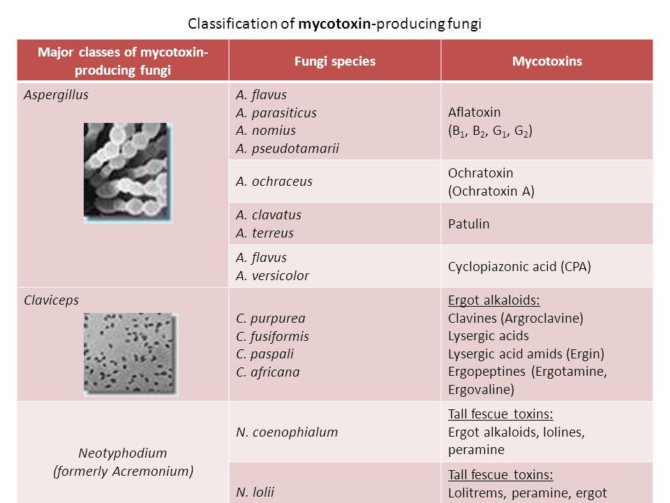 Classification of mycotoxin-producing fungi Major classes of mycotoxin- producing fungi Fungi speciesMycotoxins Aspergillus A.